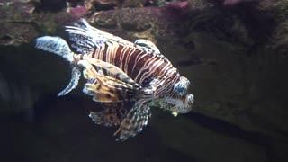 exotic fish in the oceanarium