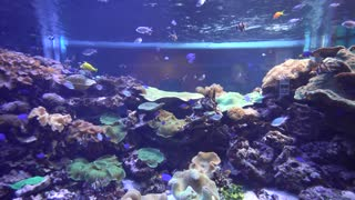 fish swimming in Oceanarium