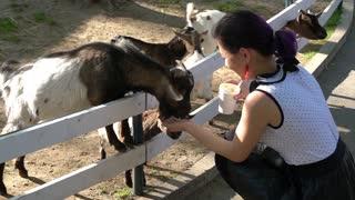 Girl feeding Baby goats in zoo