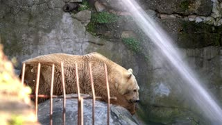 Ice bear lying on cliffs in the zoo