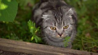 lop-eared cat outside outside