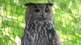 Owl sitting in the zoo behind the wire
