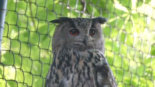 Owl sitting in the zoo