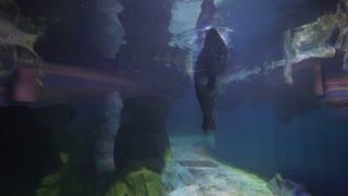 sea lion in the oceanarium