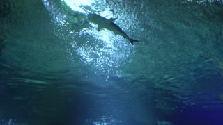 Sharks and small fish swimming in aquarium pool