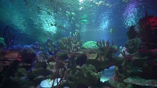 Sharks and small fish swimming in aquarium