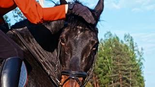 stroking a horse's head