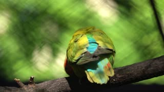 The court parrot ,colorful parrot ,beautiful parrots,parrots looking for parrots sitting,animals