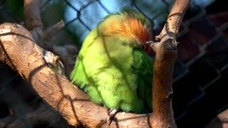 The court parrot ,colorful parrot ,beautiful parrots,parrots looking for parrots sitting,animals