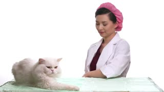 Veterinarian doctor and a white cat