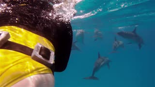 A freediver girl swims with free dolphins in sea