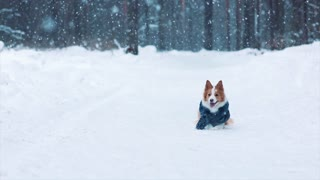 Cute dog on hind legs in winter