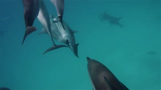 Cute dolphins flock, close to you