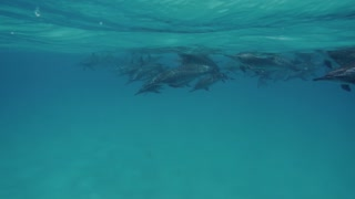Cute dolphins flock, close up