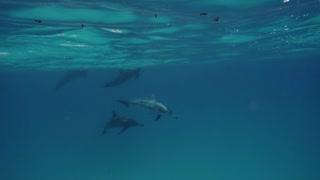 Cute dolphins underwater