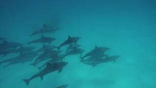 dolphin deep underwater on blue ocean