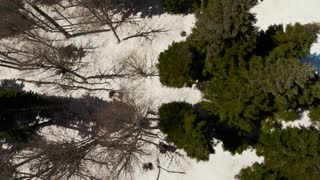 Flight over a snowy winter forest