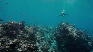 Free diver exploring coral reef in sea