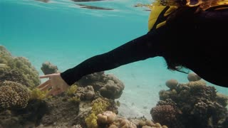 Free diver swimming underwater over coral reef