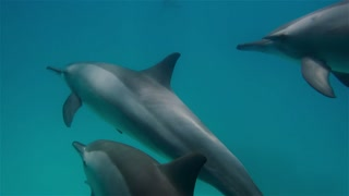 free dolphins in clear water