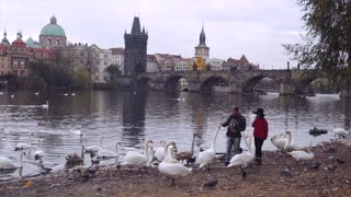 Happy hispanic couple feeding swans at Prague lake