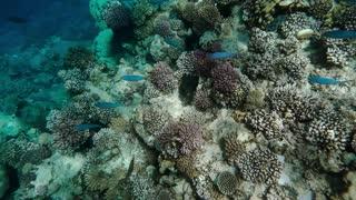 Wonderful and beautiful underwater world