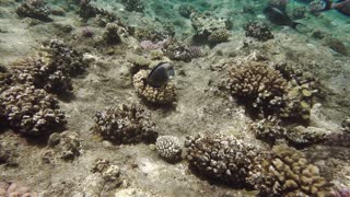 Wonderful underwater world of coral reef