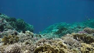 Wonderful underwater world
