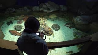 Woman taking pictures of fish in oceanarium