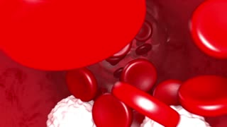 Blood Flow Animation 1080p