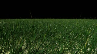 Grass Field 1080p with Alpha Channel