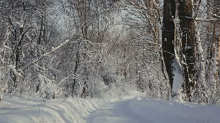 Road through snowy forest