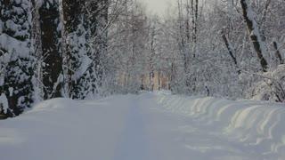 Road through snowy Park