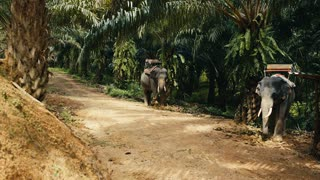 two Asian elephants in the shade of the jungle
