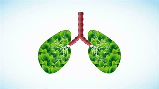 Green Lungs, Video Animation