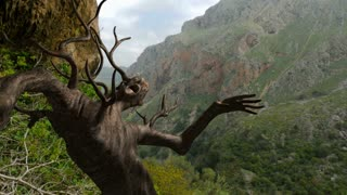 Tree Character Awakens in Majestic Canyon High-Quality VFX (visual effects).  Mountains location is on the island of Crete.