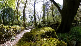 A 360 panorama taken from a mossy stone bridge in an old Irish forest in 4k resolution.