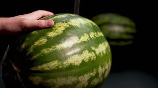 4k. Ultra HD. Man hand with knife slice and cut Big green striped fresh tasty wet watermelon. Static camera closeup shot at black bg isolated. Soft light and shadows