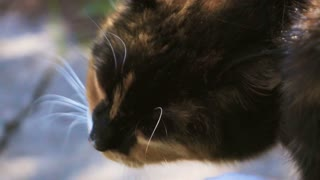 Young funny tabby cat sitting and scratches his head in super slow motion. Macro shooting on high-speed camera