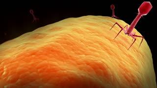 A bacteriophage virus killing bacteria.