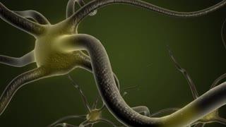 Neuron cells pulse.