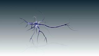Sturcture of a neuron.