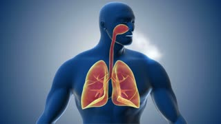 Visualization of human respiratory system.