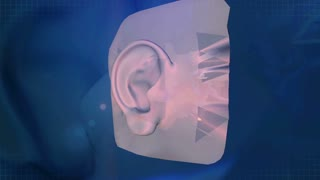 The Human Ear Animation