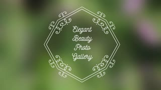 Elegant Beauty Photo Gallery
