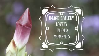 Image Gallery Lovely Photo Moments