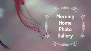 Morning Home Photo Gallery