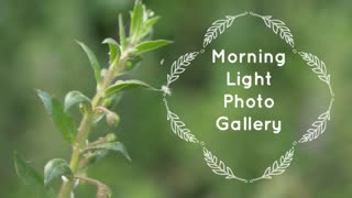 Morning Light Photo Gallery