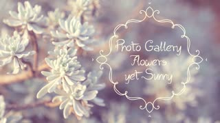 Photo Gallery Flowers Yet Sunny