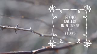 Photo Gallery In A Sunny Or Chard